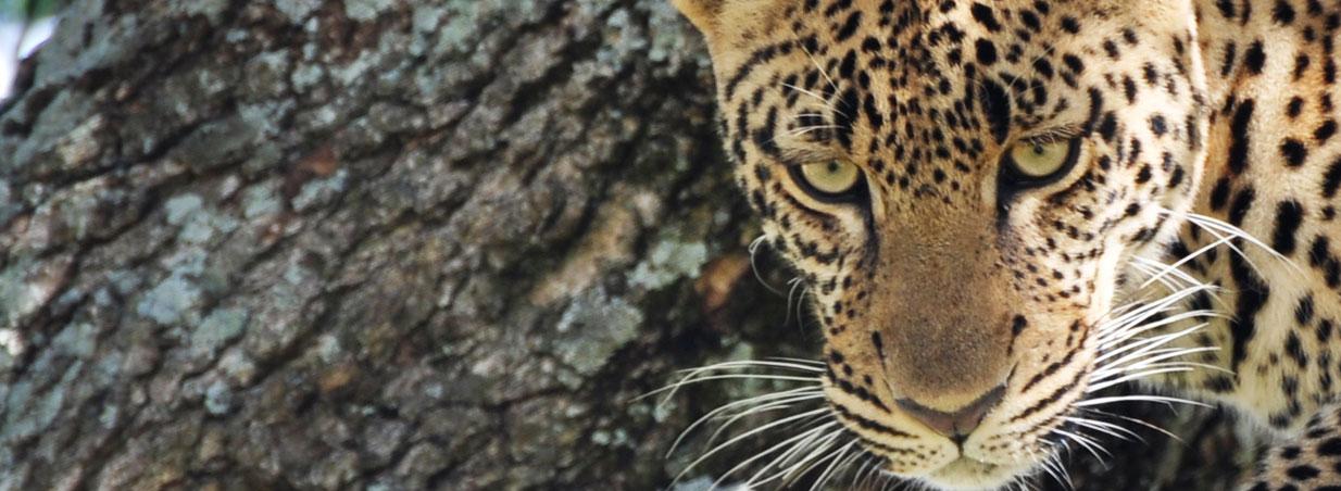 10 Days 9 Nights Safari Serengeti Wild Cats