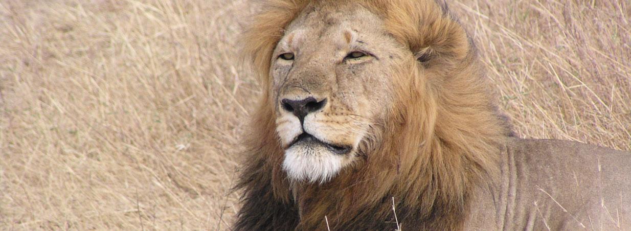 Kenya holiday safari