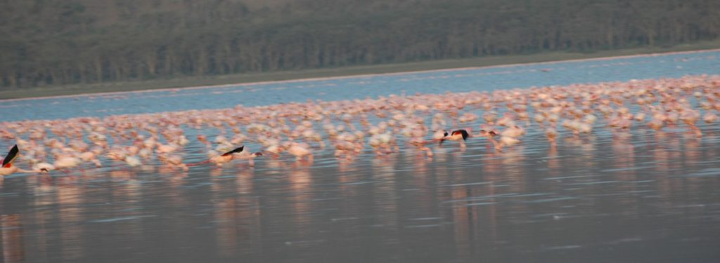 2 Days lake Nakuru National Park