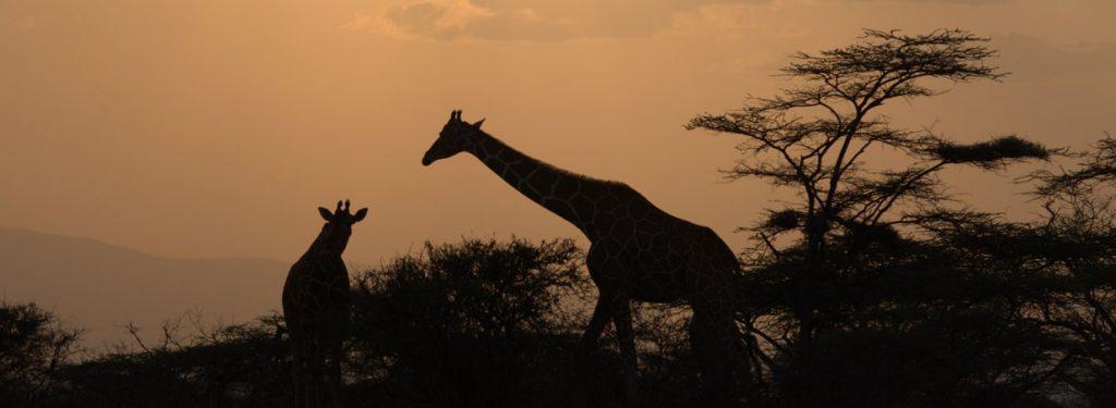 Day trip lake Nakuru