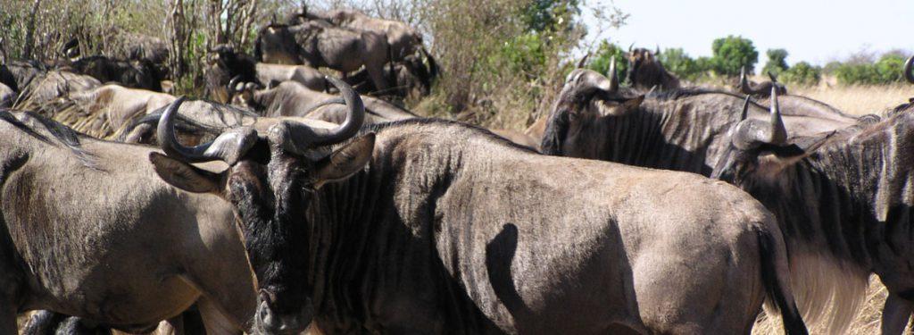 viewing animals, Kenya safari lodges