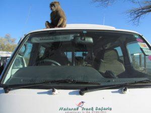 Tana river primate reserve