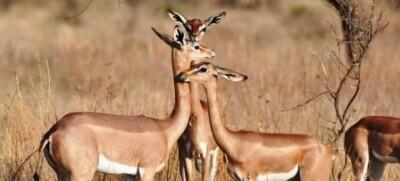Kenya Deaf Safari